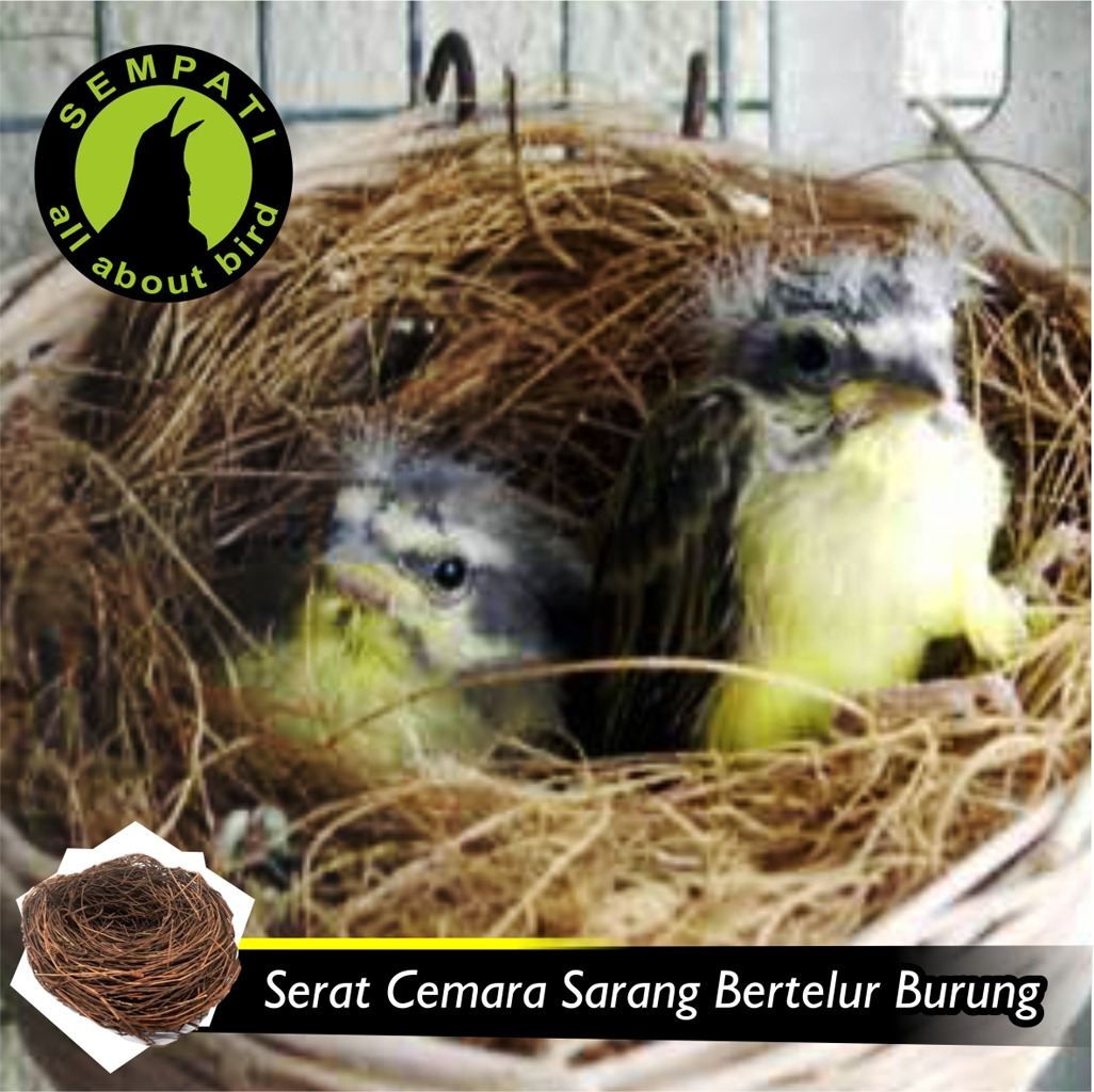 Serat Cemara Sarang Tempat Bertelur Burung Sempati Bird Shop