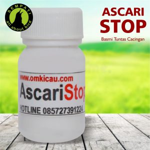 ASCARI STOP OM KICAU