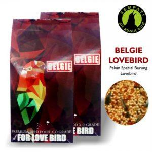 BELGIE LOVEBIRD