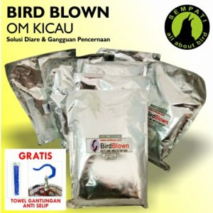 BIRD BLOWN OM KICAU