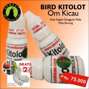 BIRD KITOLOT TETES OM KICAU