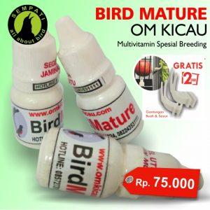 BIRD MATURE OM KICAU 1