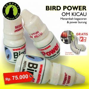 BIRD POWER OM KICAU 1