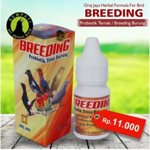 BREEDING ORIQ JAYA