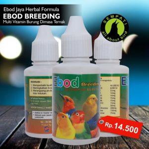 EBOD BREEDING EBOD JAYA
