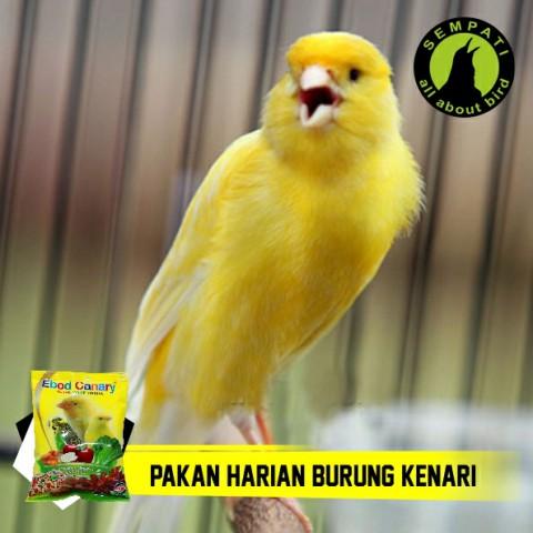 Pakan Burung Kenari Harian Kemasan Plastik Ebod Jaya Sempati