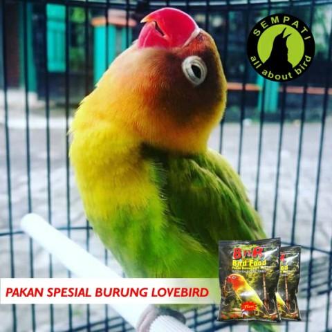 PAKAN BURUNG LOVEBIRD HARIAN BNR