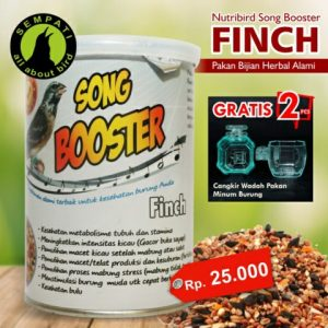 SONG BOOSTER FINCH