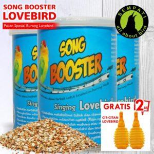 SONG BOOSTER LOVEBIRD 2