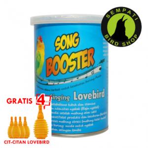 SONG BOOSTER SINGING LOVEBIRD