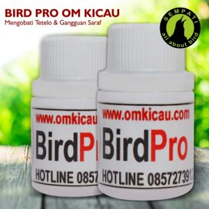 bird pro om kicau
