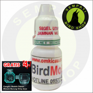 BIRD MOLT OM-KICAU