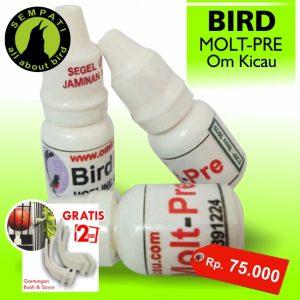 BIRD MOLT PRE OM KICAU
