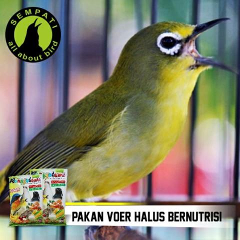 Pakan Burung Pleci Oriental White Eye Ronggolawe Ebod Jaya Sempati Bird Shop