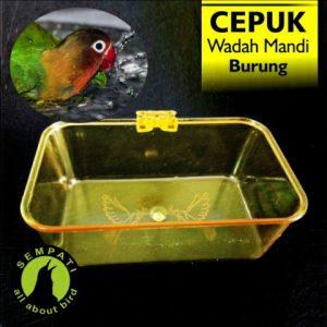 CEPUK MANDI BURUNG HOME