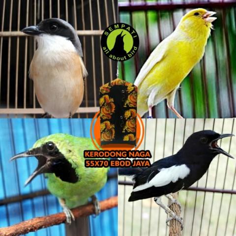LoveBird Sangkar Bulat besar krodong Burung Hewan Jualo Source · Oriq Jaya Source KERODONG KRODONG SANGKAR