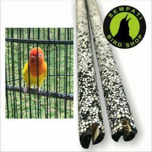 TANGKRINGAN LOVEBIRD MUTIARA (2)