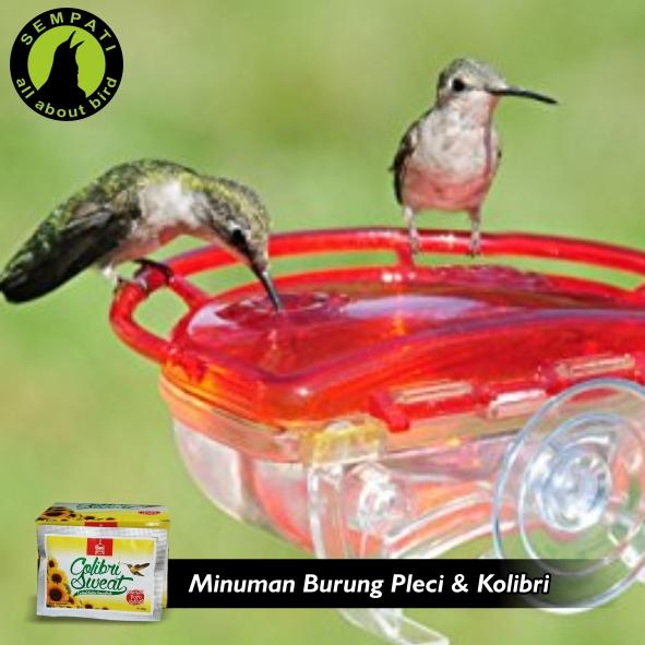 Colibri Sweat Ba Bani Aljawani Pakan Minum Burung Kolibri Sempati Bird Shop