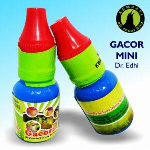 GACOR MINI DR EDHI