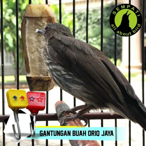 LOMBA KAOS ANIS POLOS ORIQ JAYA. Source · Krodong Sangkar Burung Kotak .