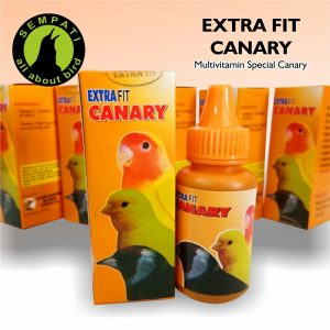 EXTRA FIT CANARY