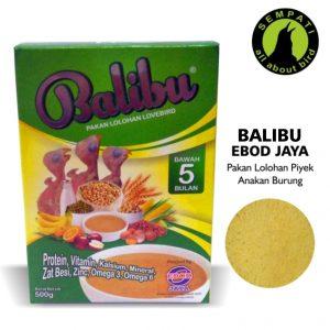 BALIBU EBOD