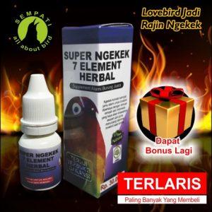 SUPER NGEKEK SEMPATI (2)