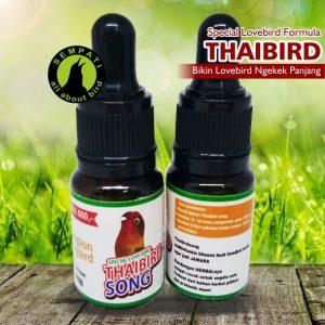 THAI BIRD SONG TAHIBIRD