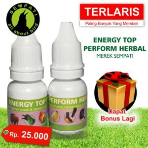 Energy Top Perform Herbal Sempati lazada elevenia yg lain