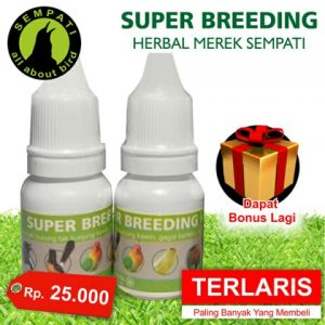 Super Breeding Herbal Sempati lazada elevenia yg lain