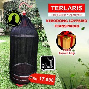 KRODONG LOVEBIRD TRANSPARAN