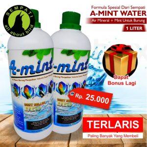 AMINT 2