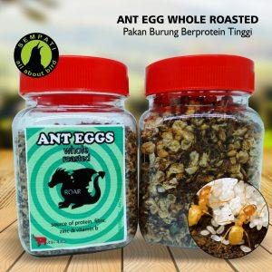 ANT EGG