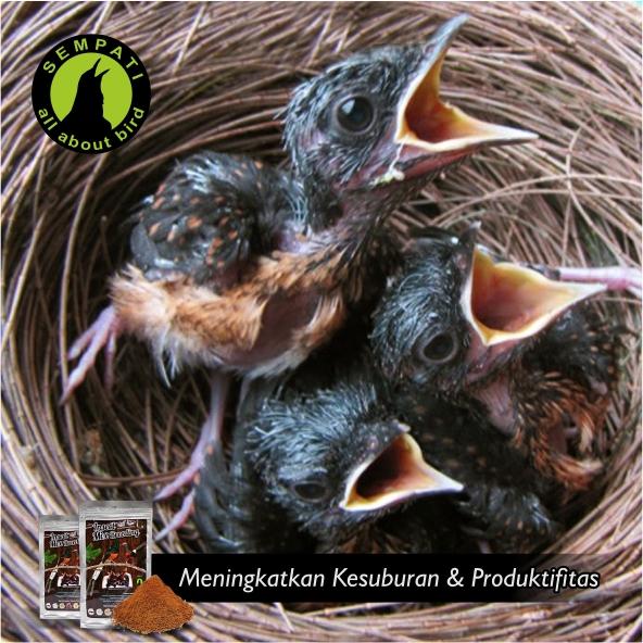Insect Mix Breeding Sempati 1 Kg Pakan Khusus Ternak Untuk Burung Murai Batu Sempati Bird Shop