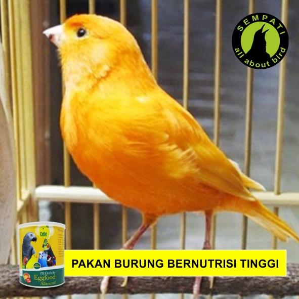 Cede Premium Egg Food Allround Pakan Burung Lovebird Kenari Parkit Finch Kakatua Jambul Grey Parrot Dll Sempati Bird Shop