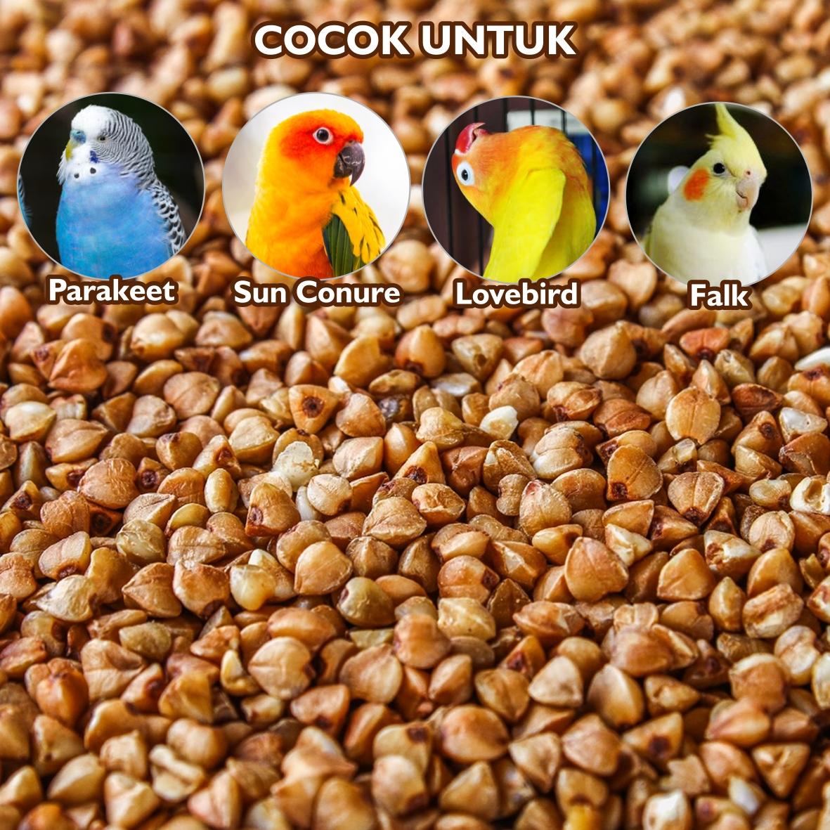 Organic Buckwheat Pakan Makanan Burung Lovebird Parakeet Parrot Paruh Bengkok Kenari Sun Conure Parkit Nuri Bakwet Falk Ternak Breeding Harian Buckrf Sempati Bird Shop