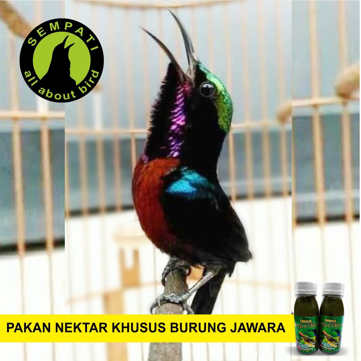 Connect Roedjak Nectar Rudjak Rujak Nektar Pakan Makanan Minum Minuman Burung Pleci Kolibri Cucak Kapas Tembak Colibri Anti Kurus Nyilet Botak Mencret Macet Lesu Rjknbd Sempati Bird Shop